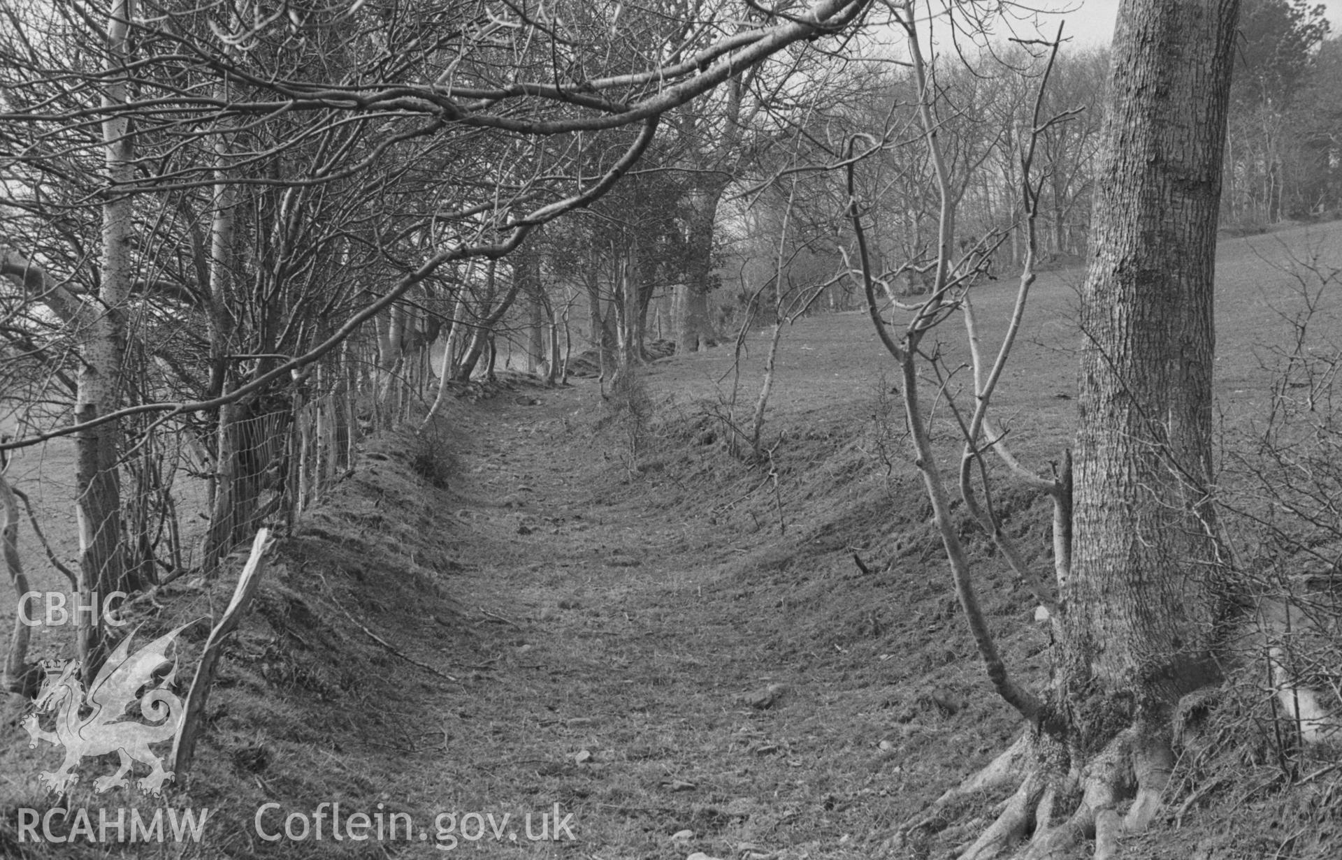 Digital copy of a black and white negative showing old lane running along slope to the south of Hen Gaer, Tirymynach, at 350ft. Photographed in April 1963 by Arthur O. Chater from Grid Reference SN 6323 8412, looking west.