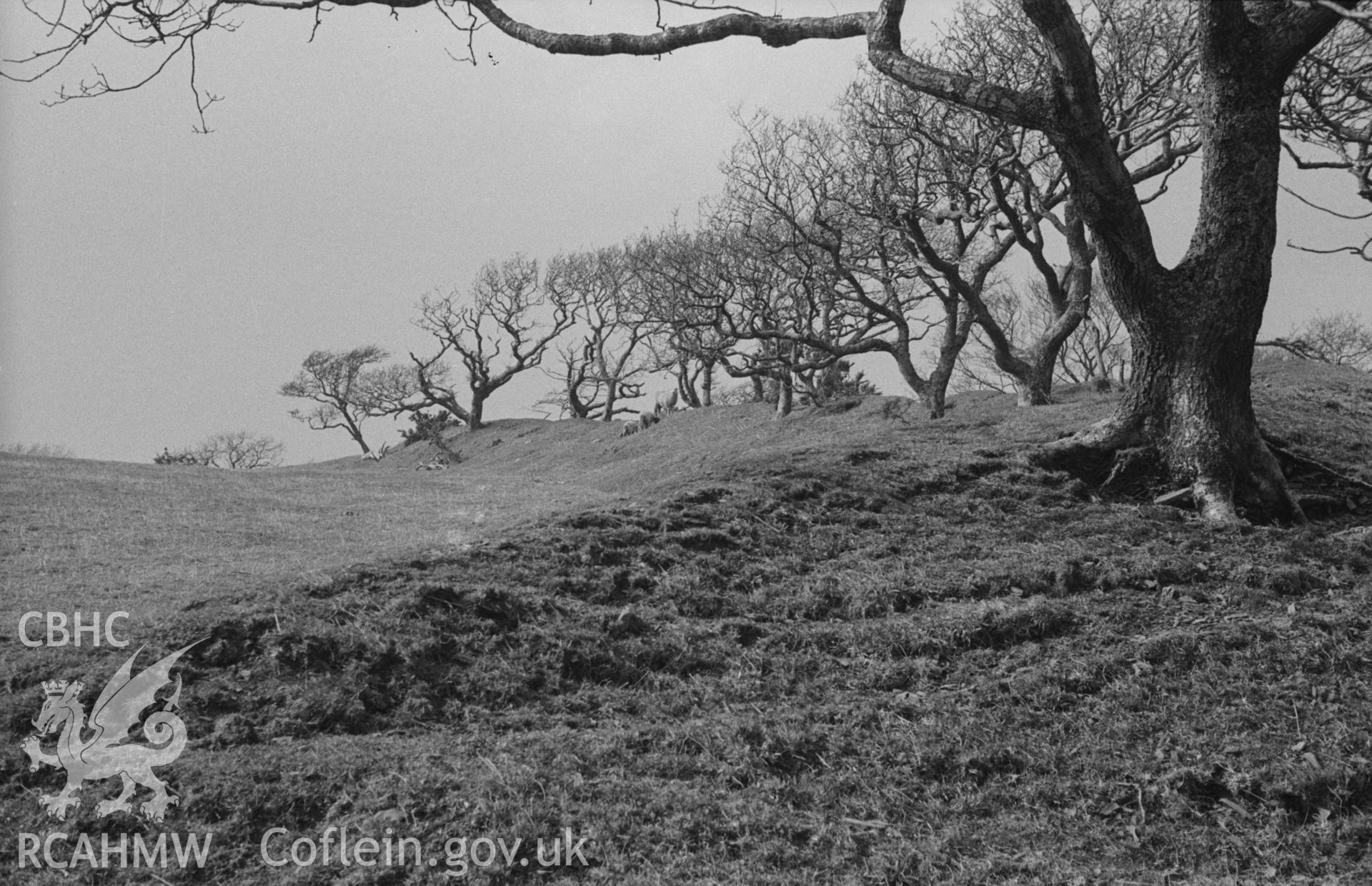 Digital copy of a black and white negative showing view across the apparent entrance at the north eastern rampart of Hen Gaer, Tirymynach. Photographed in April 1963 by Arthur O. Chater.